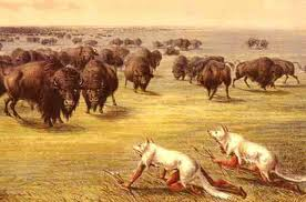 Native American hunting buffalo