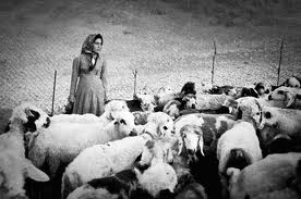 Pastoralist with sheep